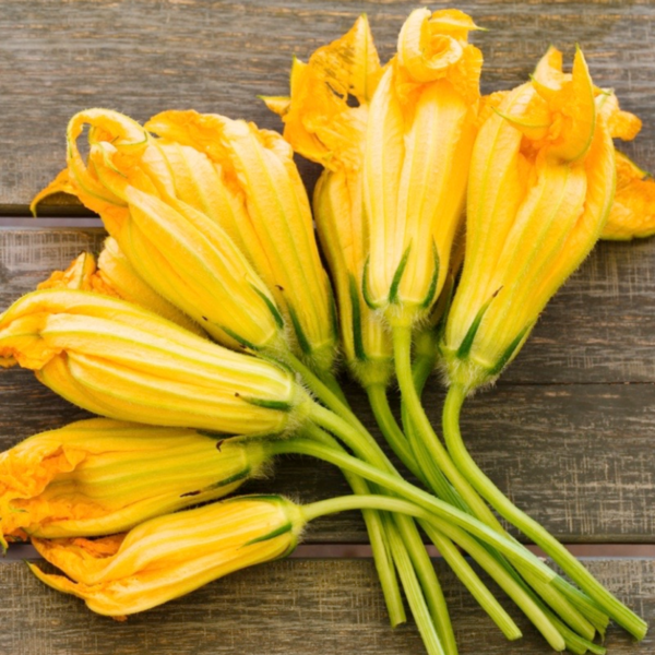 fiori di zucca fruktosa